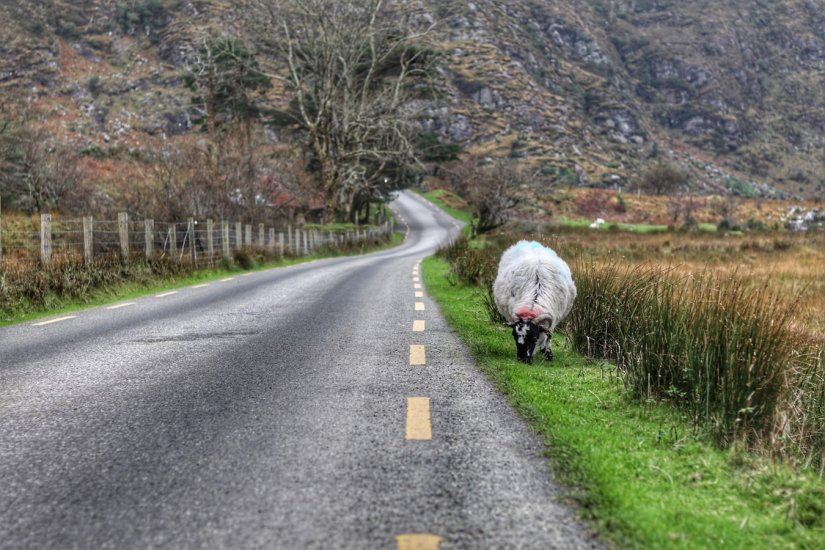 Gap of Dunloe, Ring of Kerry